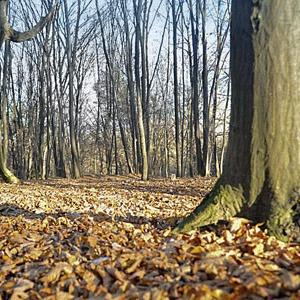 Киевские деревья получат статус памятников — Ситуація на The Village Україна
