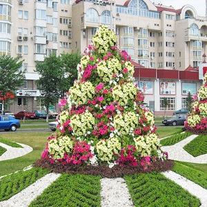Киев украсят клумбами с символикой Евро-2012 — Євро-2012 на The Village Україна