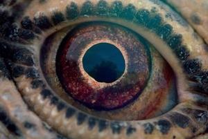 Земля, вода, повітря, вогонь: Без чого не можна уявити фільми Терренса Маліка