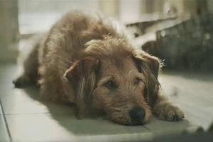 5 соціальних відео про собак і людей
