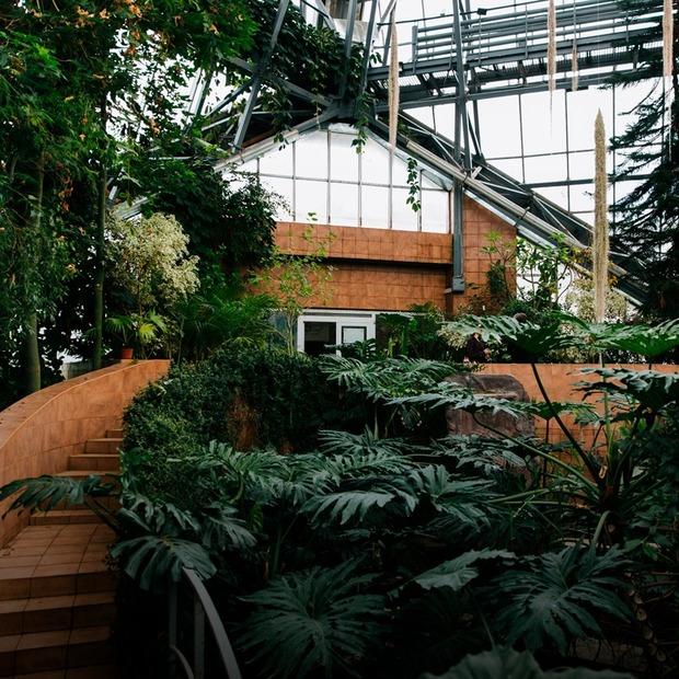 Я працюю в Ботанічному саду імені Гришка