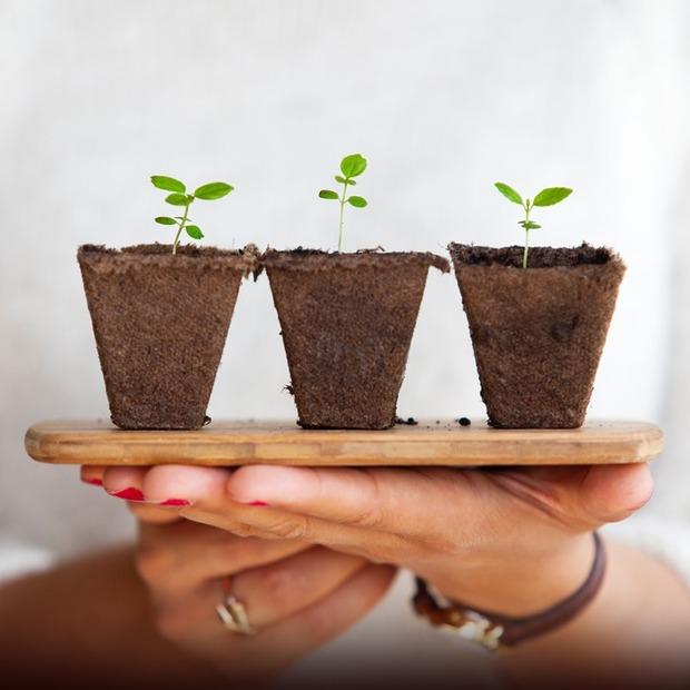 Чек-лист: як пересаджувати кімнатні рослини — Речі для дому на The Village Україна