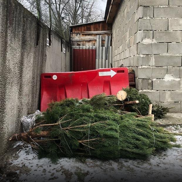 Що треба знати, щоб віддати ялинку на переробку — Репортаж на The Village Україна