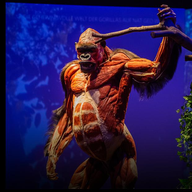 Виставку реальних тіл тварин відкрили на ВДНГ. Дивіться фото