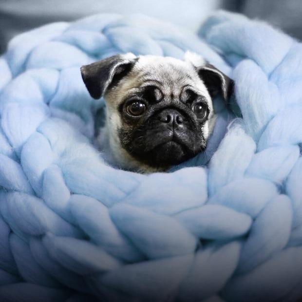 Не вилазити з-під ковдри: 8 українських брендів текстилю для дому — Речі для дому на The Village Україна