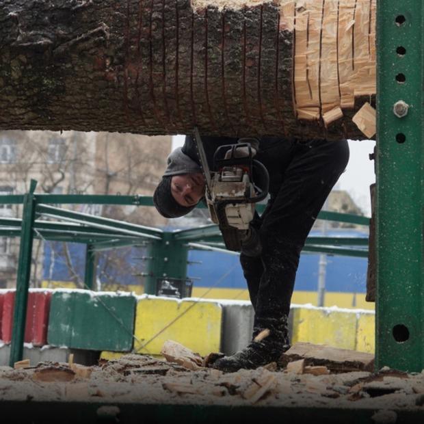 Новорічну ялинку привезли до Києва