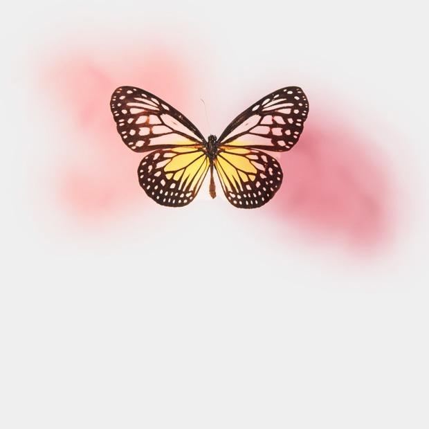 «У моєї дитини «синдром метелика». Ні, їй не боляче!»