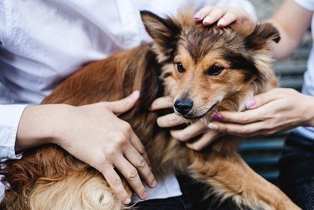7 притулків, із яких можна взяти тварину — Звірі у місті на The Village Україна