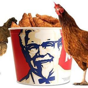 В Киеве появится сеть быстрого питания Kentucky Fried Chicken — Ситуація на The Village Україна