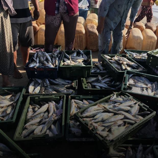 Seaspiracy: Риболовна індустрія шкодить довкіллю більше, ніж пластик