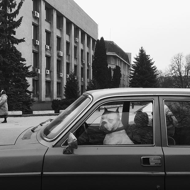 Собаки за кермом, «Інтурист», сакура: альтернативний Ужгород у проєкті «Альтернативна археологія» — Камера спостереження на The Village Україна