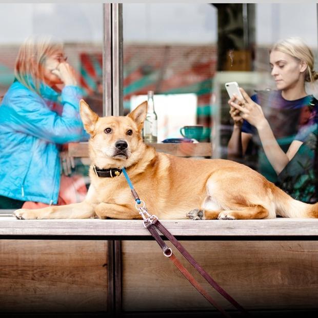 Who Let The Dogs Out: куди в Києві можна (і не можна) зайти з собакою — Гід The Village на The Village Україна