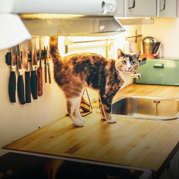Сорок кішок: як підготувати квартиру для життя з тваринами — Дизайн-хак на The Village Україна