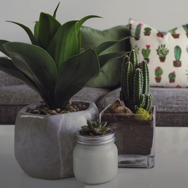 5 невибагливих кімнатних рослин для домашніх джунглів