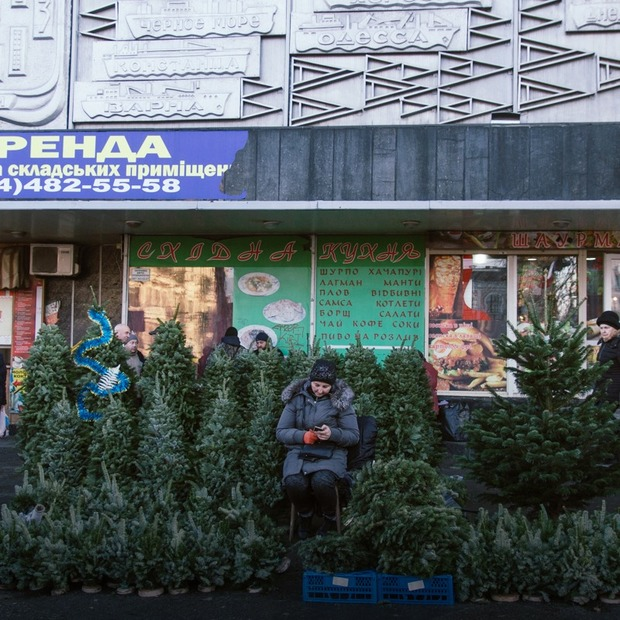 Де у Києві легально придбати ялинку?