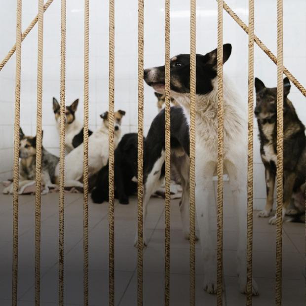 «Він був просто прив'язаний до дерева». Це міська ветклініка, де лікують безпритульних тварин  — Репортаж на The Village Україна