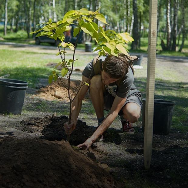 Міські джунглі. Це люди, які озеленюють свої двори та парки  — Еко на The Village Україна