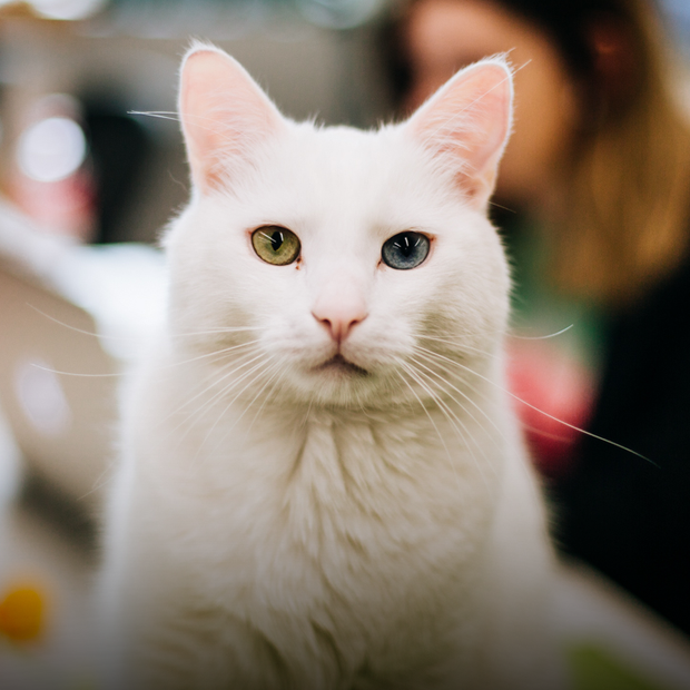 Київські коти про йогу, маркетинг та рейви — Звірі у місті на The Village Україна