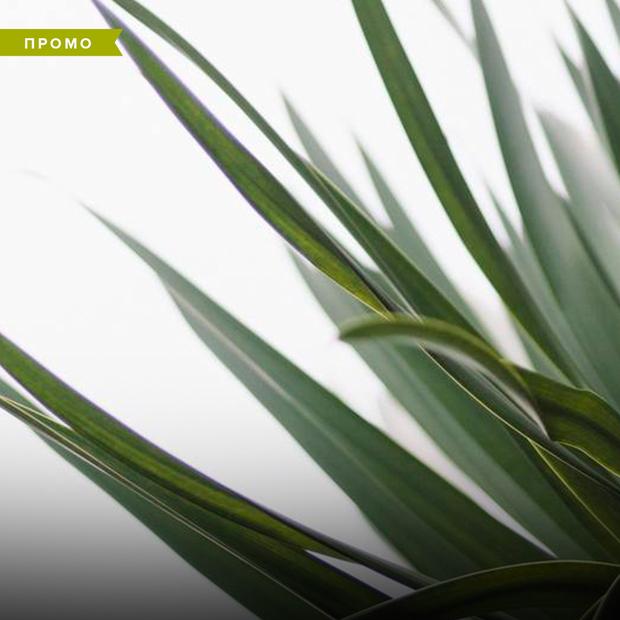 Арган чи м'ята: які рослини корисні для нашої шкіри — Промо на The Village Україна