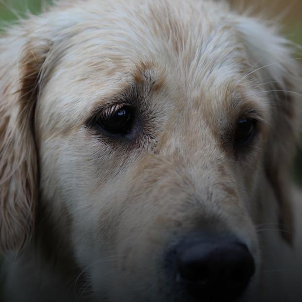 Я став свідком знущання над твариною. Розповідаємо, що треба робити і чи карають за це в Україні  — Звірі у місті на The Village Україна