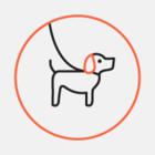 На Подолі з'явився «Песопарк»: у ньому собаки можуть гуляти без повідка й тренуватися