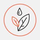 У Черкаській області встановили «сонячне дерево» для підзарядки гаджетів
