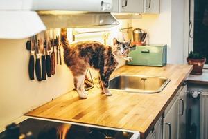 Сорок кішок: як підготувати квартиру для життя з тваринами
