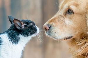 Заводимо домашню тварину: інструкція для господаря-новачка