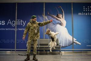 Як живуть собаки в метро та аеропорту