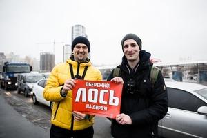 «Обережно! Лось на дорозі»: хто і навіщо полює на київських порушників