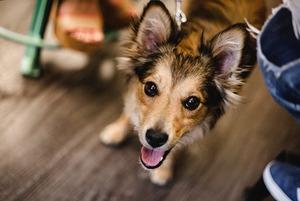 Що робити, якщо ви знайшли безпритульного собаку