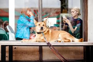 Who Let The Dogs Out: куди в Києві можна (і не можна) зайти з собакою
