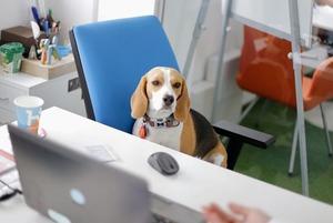 Дивіться, хто прийшов з собаками на роботу
