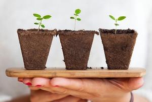 Чек-лист: як пересаджувати кімнатні рослини
