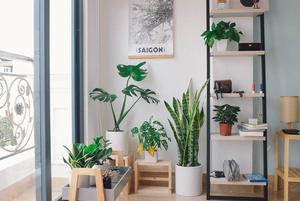 Які рослини зараз актуальні та як їх правильно «вписати» в інтер'єр