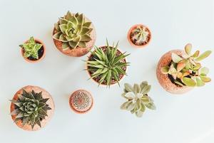 Горщик у горошок: гід керамікою для рослин