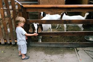 Літо на ВДНГ для дітей: басейн, театр і контактний зоопарк