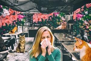 Як вижити у pet-friendly місті, якщо в тебе алергія на тварин