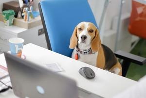 Аби всім було комфортно: 5 порад для тих, хто бере із собою собаку в офіс