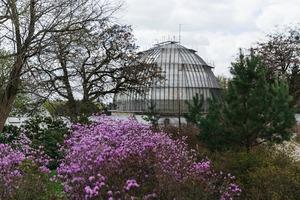 Весна у місті: що вже цвіте у Ботсаду
